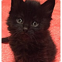 Adopt A Pet :: Carrie - Plymouth, MN