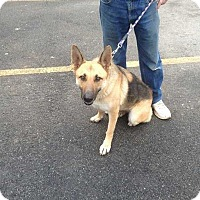 Adopt A Pet :: Roxy - Acworth, GA