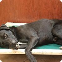Adopt A Pet :: Riley Union - Jewett City, CT