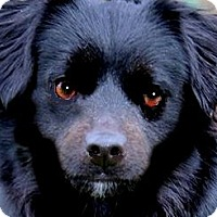 Adopt A Pet :: JAMIE(OUR LITTLE  CUDDLER!! - Wakefield, RI