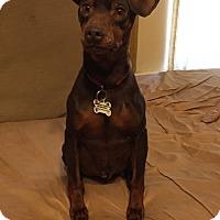 Adopt A Pet :: Drake - Poplarville,, MS