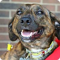 Adopt A Pet :: Clyde - Springfield, MO