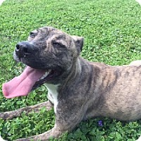 Adopt A Pet :: Liza - Aurora, IL