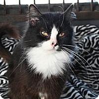 Adopt A Pet :: Maria - Norwich, NY