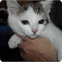 Adopt A Pet :: Bridgette - Riverside, RI