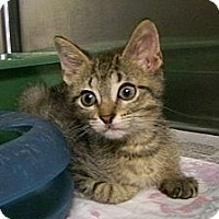 Adopt A Pet :: Foster - Dover, OH