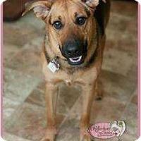 Adopt A Pet :: LULU - Haverhill, MA