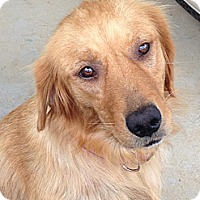 Adopt A Pet :: Isa - Windam, NH