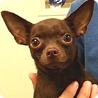Adopt A Pet :: Treena - Orlando, FL