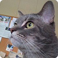 Adopt A Pet :: Zane Grey(PERSONALITY +) - Sterling Hgts, MI