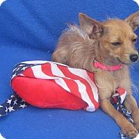Adopt A Pet :: Mayzie - Irvine, CA