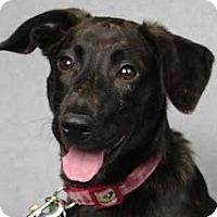 Adopt A Pet :: Keely - Minneapolis, MN