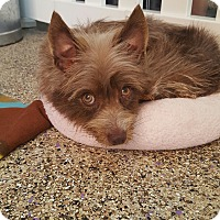 Adopt A Pet :: Katie - Thousand Oaks, CA