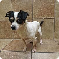 Adopt A Pet :: Mordin *Petsmart GB* - Appleton, WI
