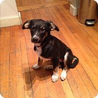 Adopt A Pet :: D'Arcy - Regina, SK