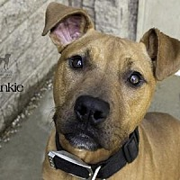 Adopt A Pet :: Frankie - South Bend, IN
