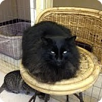 Adopt A Pet :: Prestley - Grand Junction, CO