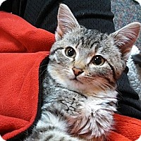 Adopt A Pet :: Hope (Courtesy) - cedar grove, IN