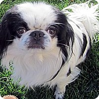 Adopt A Pet :: Marik - Aurora, CO