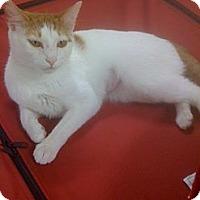 Adopt A Pet :: Honey - Monroe, GA