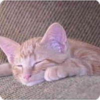 Adopt A Pet :: Hunny Bunny - Washington Terrace, UT