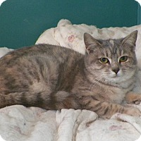 Adopt A Pet :: Pearl - Dover, OH