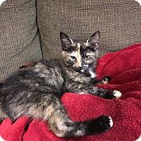 Adopt A Pet :: Guadalupe - Columbus, OH