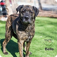 Adopt A Pet :: Bella - Kansas City, MO