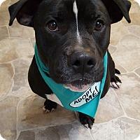 Adopt A Pet :: Buddy - Fennville, MI