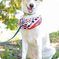 Adopt A Pet :: Jennie - Castro Valley, CA