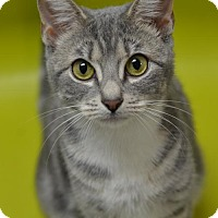 Adopt A Pet :: Beamers 161614 - Atlanta, GA