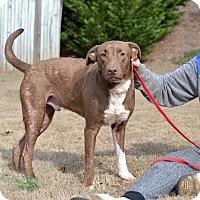 Adopt A Pet :: Topaz - Acworth, GA