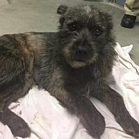 Adopt A Pet :: Amy - Centerville, GA