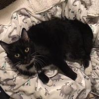 Adopt A Pet :: Molly McButter - St. Louis, MO