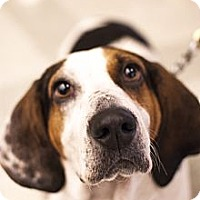 Adopt A Pet :: Lily - Chicago, IL
