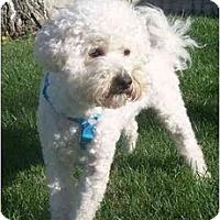 Adopt A Pet :: Joey - La Costa, CA
