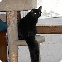 Adopt A Pet :: Clara Belle - Richland, MI