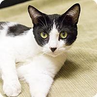 Adopt A Pet :: Brock - Chicago, IL