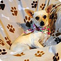 Adopt A Pet :: Annie - Weatherford, TX