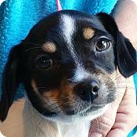 Adopt A Pet :: Ying - Plainfield, CT