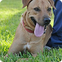 Terrier (Unknown Type, Small) Mix Dog for adoption in Rockport, Texas - Sasha