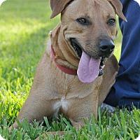 Adopt A Pet :: Sasha - Rockport, TX