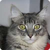 Adopt A Pet :: Ratchet - Sarasota, FL