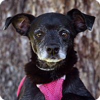 Adopt A Pet :: Sammie - Los Angeles, CA