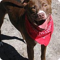 Adopt A Pet :: Redd - Voorhees, NJ