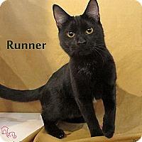 Adopt A Pet :: Runner - St Louis, MO