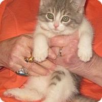 Adopt A Pet :: Chablis - Dallas, TX