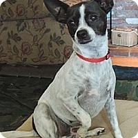 Adopt A Pet :: Mia - La Habra Heights, CA