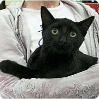 Adopt A Pet :: Chandler - Reston, VA