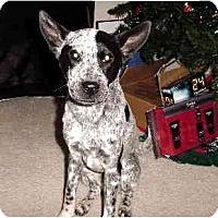 Adopt A Pet :: Storrie - Scottsdale, AZ